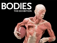 Banner for Bodies The Exhibition