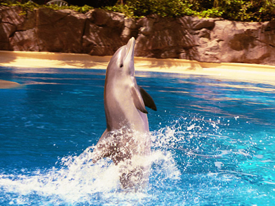 siegfried roy 39 s secret garden dolphin habitat discounts