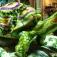 Bellagio Gardens Summer Display – Eco: A Season of Earthly Awareness