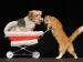 Cat Pushing Dog in a Stroller