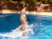 The Wondrous Bottlenose Dolphin Performing